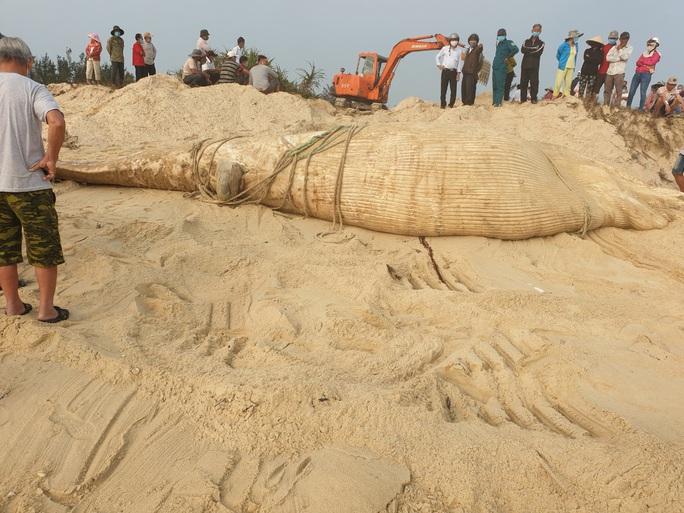 Xác cá voi khổng lồ trôi vào bờ biển Quảng Nam - Ảnh 3.