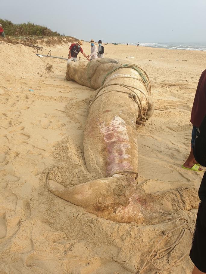 Xác cá voi khổng lồ trôi vào bờ biển Quảng Nam - Ảnh 1.