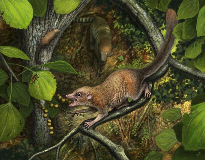 Phát hiện tổ tiên 65,9 triệu tuổi của chúng ta, giống… chuột - Ảnh 2.
