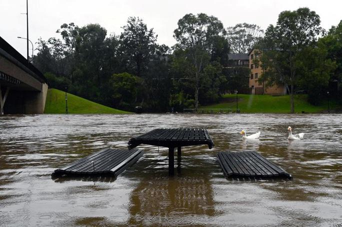 Sydney gặp họa lớn, dân sơ tán khẩn cấp trong đêm - Ảnh 2.