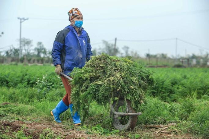CLIP: Người dân Hải Dương nườm nượp ra vườn nhổ bỏ nông sản - Ảnh 11.
