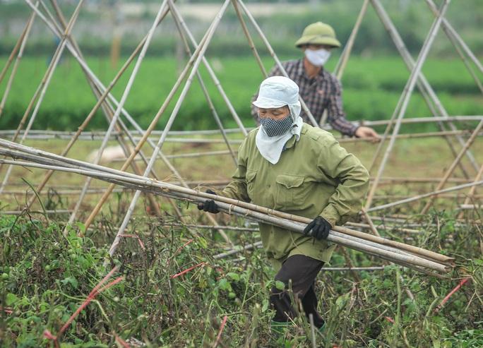 CLIP: Người dân Hải Dương nườm nượp ra vườn nhổ bỏ nông sản - Ảnh 9.