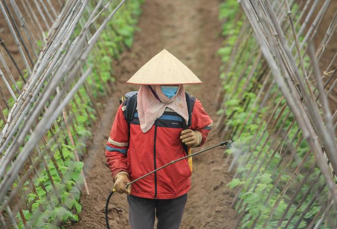 CLIP: Người dân Hải Dương nườm nượp ra vườn nhổ bỏ nông sản - Ảnh 17.