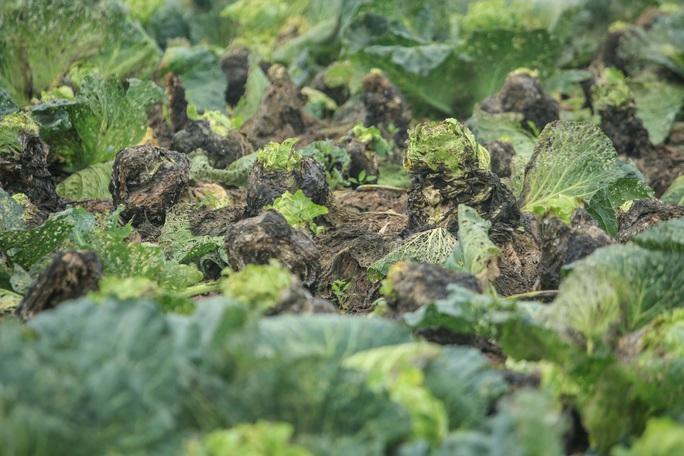 CLIP: Người dân Hải Dương nườm nượp ra vườn nhổ bỏ nông sản - Ảnh 13.