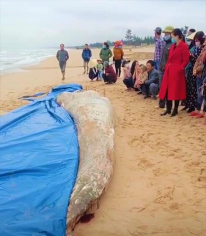 Cá voi trắng nặng 2 tấn chết trôi dạt vào bờ biển Quảng Bình - Ảnh 1.