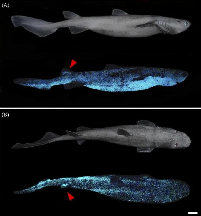 Phát hiện 3 thủy quái ma khổng lồ đang phát sáng dưới đáy biển - Ảnh 1.