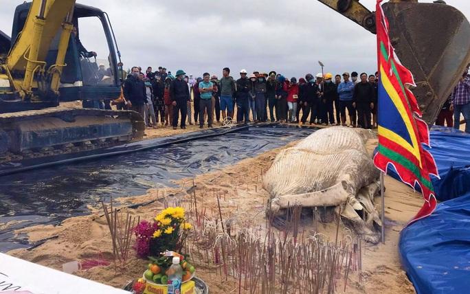 Dùng máy xúc chôn cất, an táng cá voi hơn 2 tấn ở Quảng Bình - Ảnh 1.