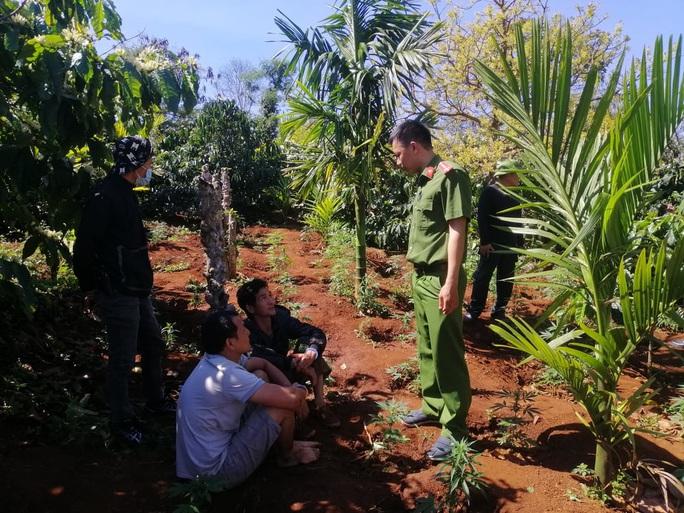 Lại phát hiện vụ trồng cần sa quy mô lớn ở Đắk Lắk - Ảnh 1.