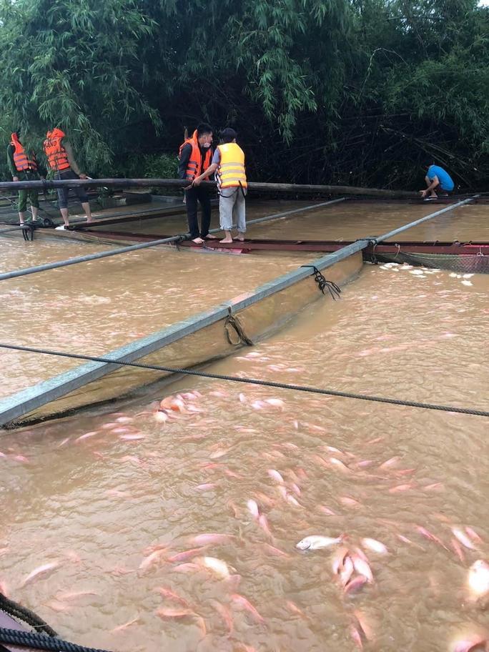 Gần 800 tấn cá bè chết trên sông Đồng Nai sau mưa lớn - Ảnh 2.