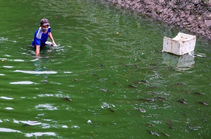 CLIP: Sông Tô Lịch bất ngờ xanh, nhiều người dân vui mừng bắt hàng tạ cá - Ảnh 11.