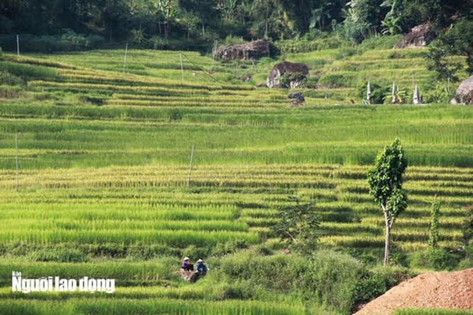 Vẻ đẹp mê mẩn mùa vàng ở Pù Luông - Sa Pa của xứ Thanh - Ảnh 3.