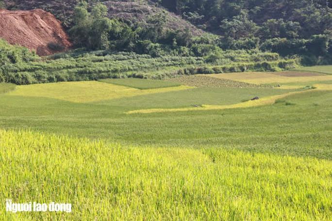 Vẻ đẹp mê mẩn mùa vàng ở Pù Luông - Sa Pa của xứ Thanh - Ảnh 8.