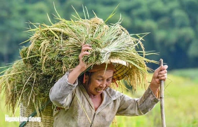 Vẻ đẹp mê mẩn mùa vàng ở Pù Luông - Sa Pa của xứ Thanh - Ảnh 16.