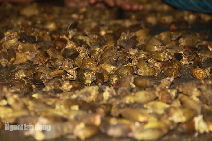 Theo các chủ đại lý thu mua, phía Trung Quốc mua cau khô về để làm kẹo