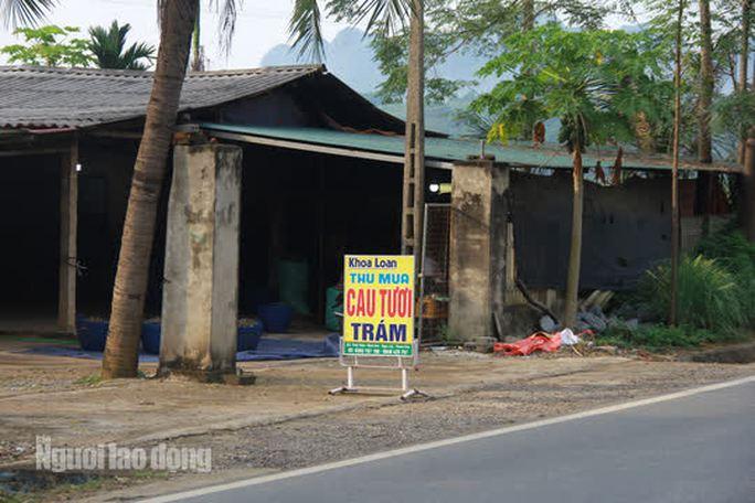 Trong số các địa điểm thu mua cau ở Thanh Hóa, huyện Ngọc Lặc có nhiều cơ sở nhất. Mỗi ngày những cơ sở này thu mua hàng chục tấn cau