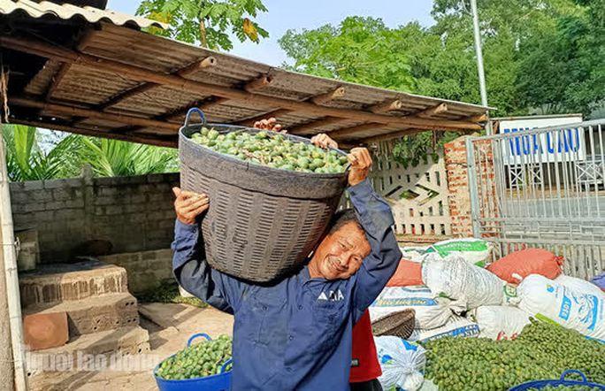 Đến nay dù tuổi đã cao, ông Hòa vẫn gắn bó với nghề do thu nhập khá 300-400.000 đồng/ngày, trong khi bình thường chẳng có công việc gì ổn định