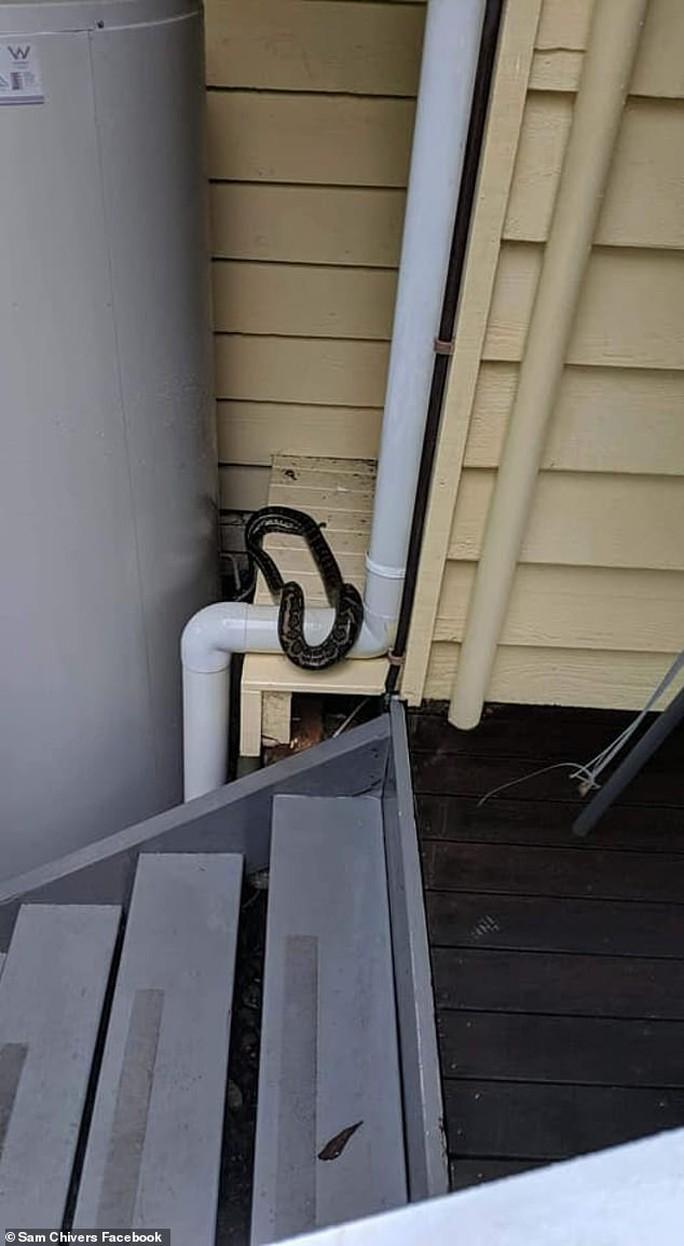 Dòng nước lũ ngồn ngộn nhện, rắn tràn vào nhà dân ở Úc - Ảnh 3.