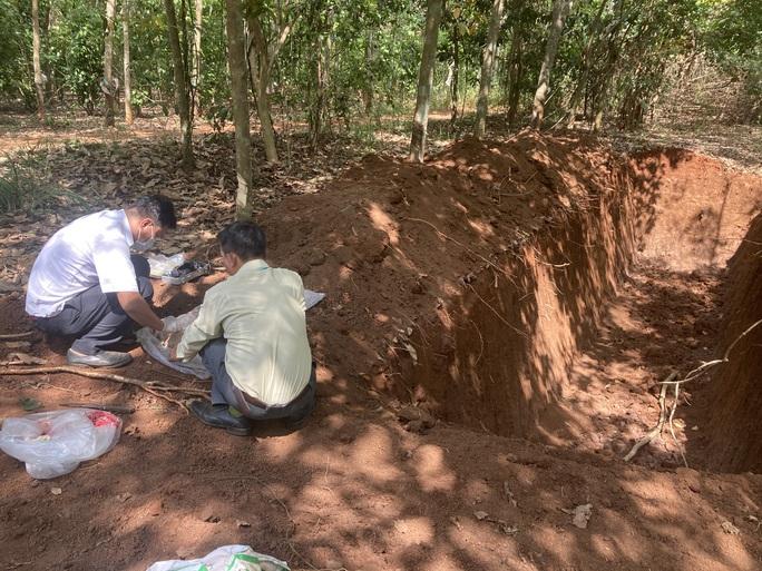 CLIP: Kinh hãi vụ đào hố khủng để đổ hơn trăm con heo xuống lấp - Ảnh 3.
