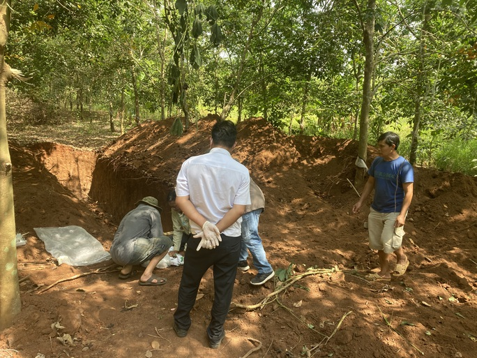 CLIP: Kinh hãi vụ đào hố khủng để đổ hơn trăm con heo xuống lấp - Ảnh 2.