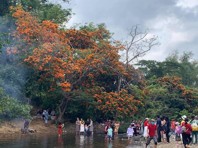 Hoa trang rừng phủ kín suối Tà Má - Ảnh 4.