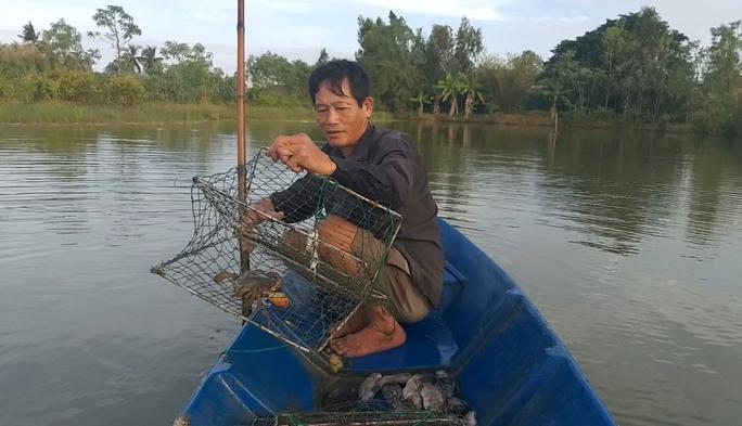Sau khi có giá 1 triệu đồng/kg, cua biển ngon nhất miền Tây chết bất thường - Ảnh 1.