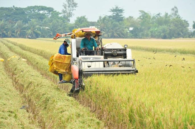Doanh nghiệp - nông dân: Bắt tay cùng làm giàu - Ảnh 1.