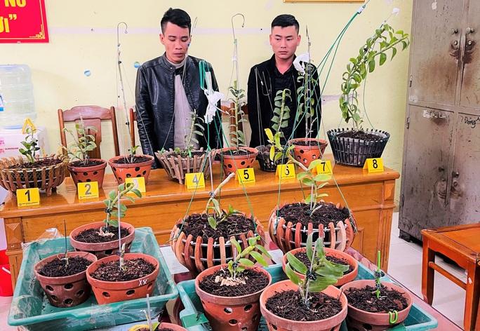 Từ Vĩnh Phúc vào Thanh Hóa trộm hoa lan đột biến giá trị tới 1,8 tỉ đồng - Ảnh 1.