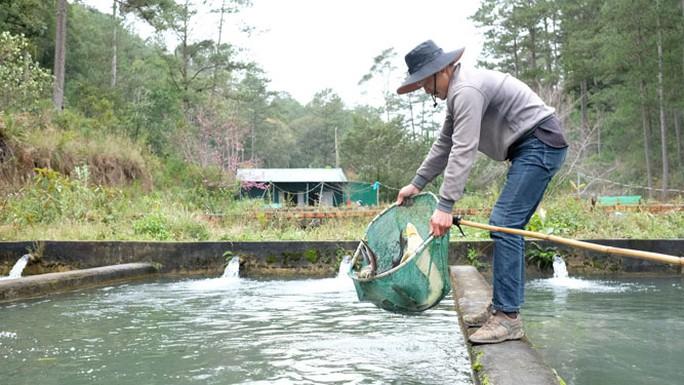 Mối lo từ cá tầm Trung Quốc - Ảnh 1.