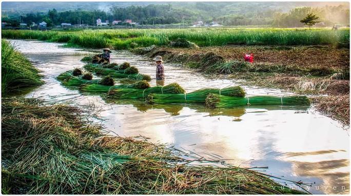 Kỷ niệm 410 năm thành lập, Phú Yên đón nhận bằng di tích quốc gia đặc biệt Gành Đá Đĩa - Ảnh 3.