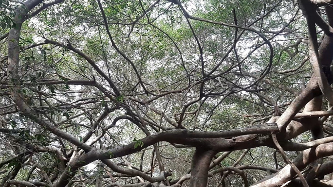 CLIP: Ngất ngây trước vẻ đẹp yên bình của rừng gừa ở miền Tây - Ảnh 3.