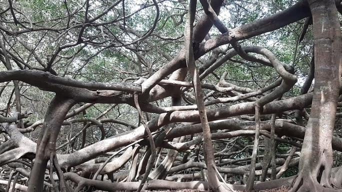 CLIP: Ngất ngây trước vẻ đẹp yên bình của rừng gừa ở miền Tây - Ảnh 4.