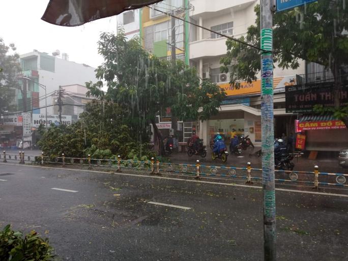 Video: Cảnh thót tim cây xanh ngã trong cơn mưa chiều ở TP HCM - Ảnh 3.