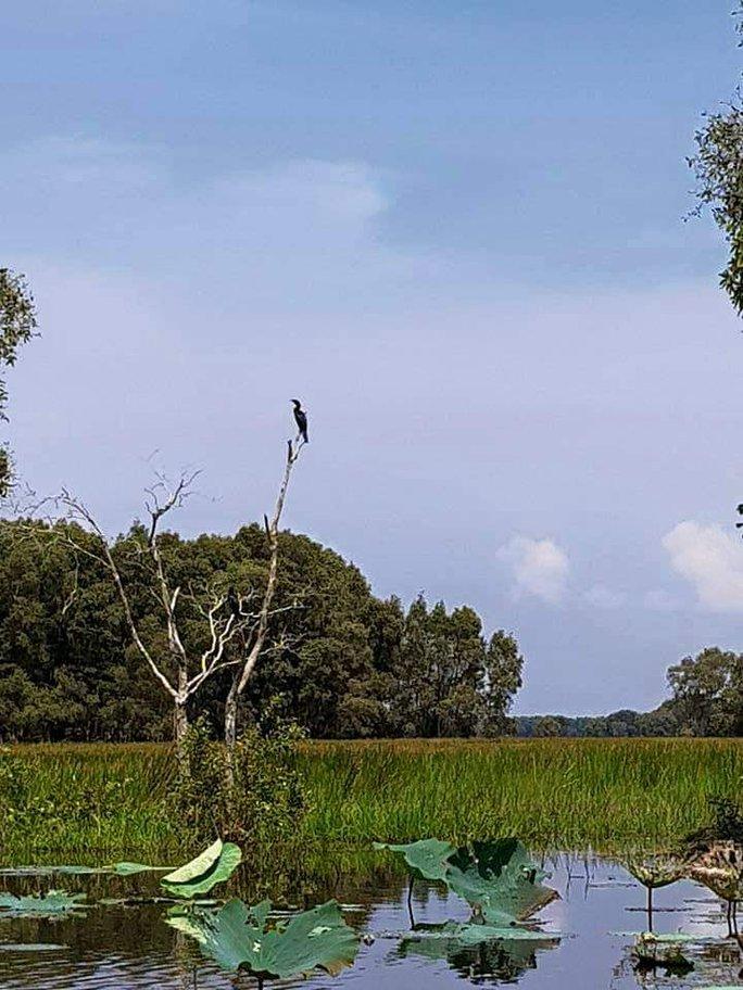 Sếu đầu đỏ trở về Vườn Quốc gia Tràm Chim sau thời gian vắng bóng - Ảnh 4.