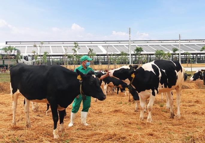 Vinamilk liên tiếp thăng hạng trong top 50 công ty sữa hàng đầu thế giới - Ảnh 3.