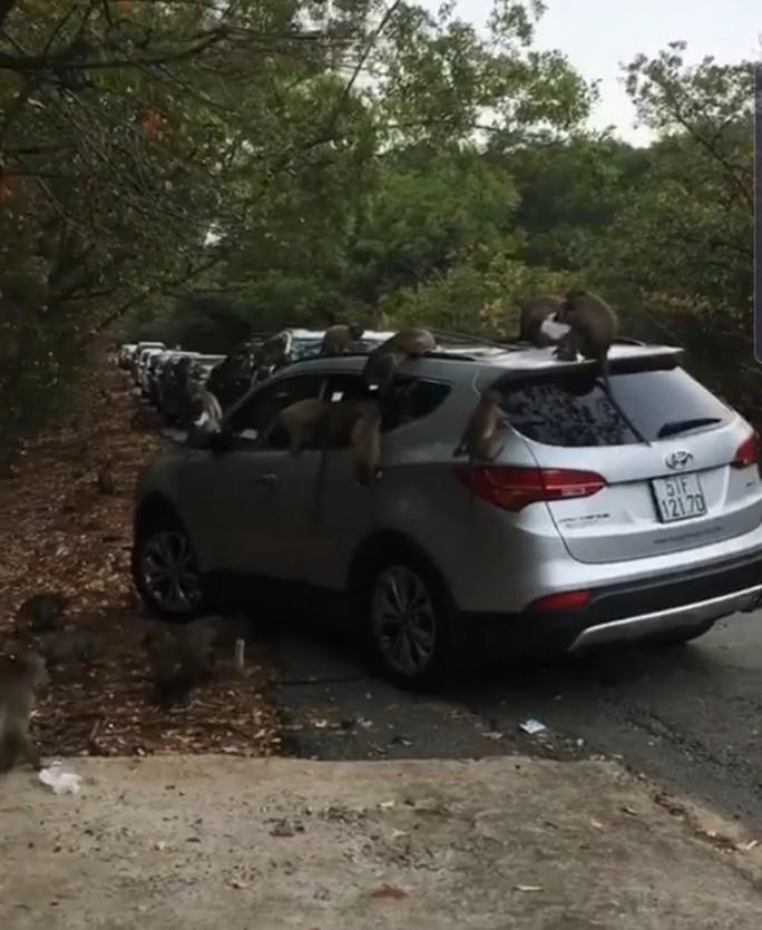 Hàng chục chú khỉ đại náo ôtô quên đóng cửa ở Cần Giờ - Ảnh 2.