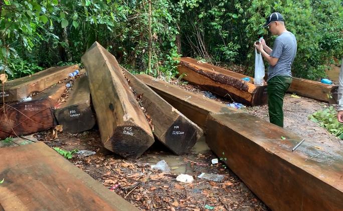 Để rừng bị phá hoại, Hạt trưởng Kiểm lâm bị kỷ luật cảnh cáo - Ảnh 1.