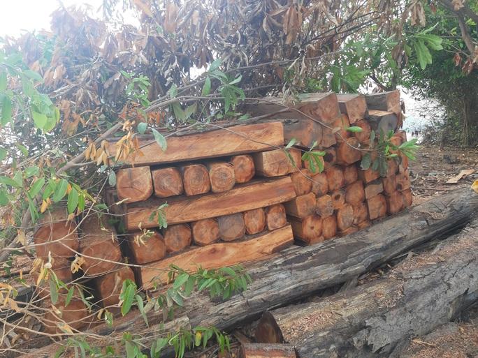 CLIP: Lợi dụng các đảo lòng hồ thủy điện để tập kết gỗ lậu? - Ảnh 4.