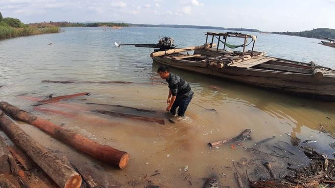 CLIP: Lợi dụng các đảo lòng hồ thủy điện để tập kết gỗ lậu? - Ảnh 3.
