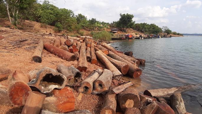 CLIP: Lợi dụng các đảo lòng hồ thủy điện để tập kết gỗ lậu? - Ảnh 1.