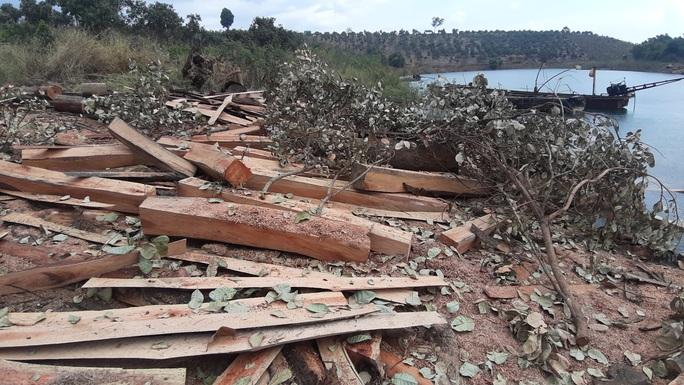 CLIP: Lợi dụng các đảo lòng hồ thủy điện để tập kết gỗ lậu? - Ảnh 2.