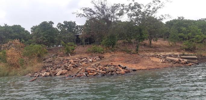 CLIP: Lợi dụng các đảo lòng hồ thủy điện để tập kết gỗ lậu? - Ảnh 5.
