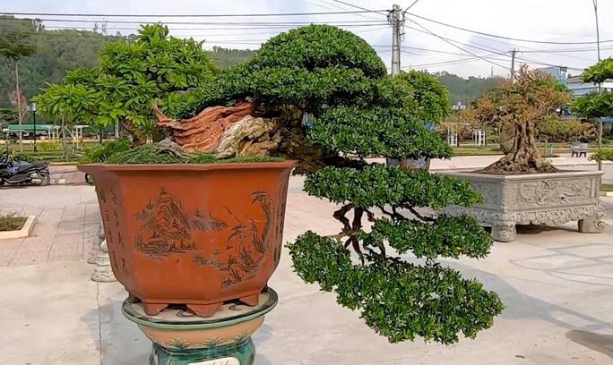 Mãn nhãn với gần 1.000 tác phẩm tại triển lãm sinh vật cảnh ở Bình Định - Ảnh 8.