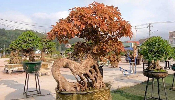 Mãn nhãn với gần 1.000 tác phẩm tại triển lãm sinh vật cảnh ở Bình Định - Ảnh 7.