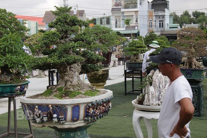 Mãn nhãn với gần 1.000 tác phẩm tại triển lãm sinh vật cảnh ở Bình Định - Ảnh 9.