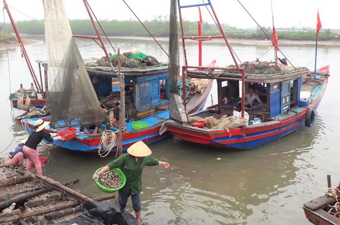 Chi 43 tỉ đồng nâng cấp chưa lâu, cảng cá ở Thanh Hóa đã trùm mền - Ảnh 9.