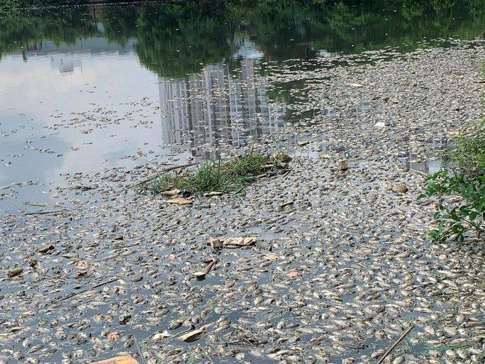 Cơn mưa ngang qua TP HCM, hàng chục tấn cá chết - Ảnh 1.