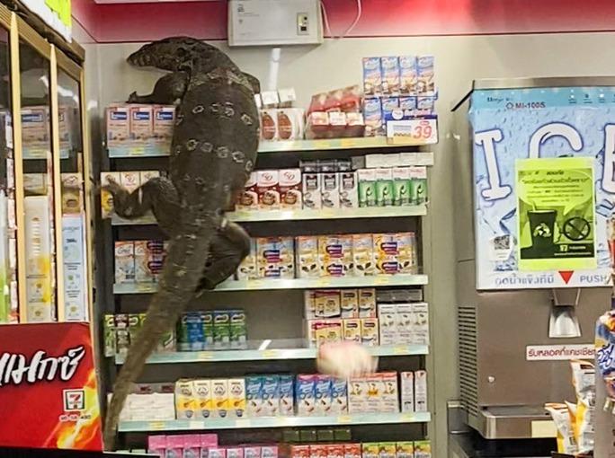 Thằn lằn khổng lồ gây náo loạn cửa hàng Thái Lan - Ảnh 3.