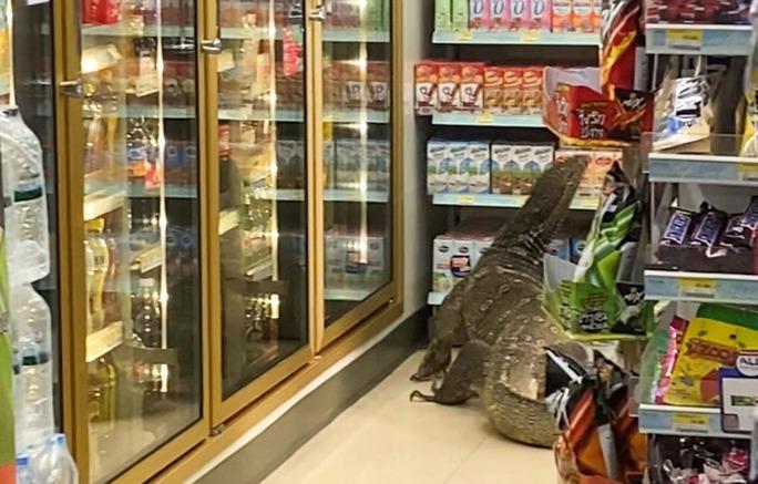 Thằn lằn khổng lồ gây náo loạn cửa hàng Thái Lan - Ảnh 2.