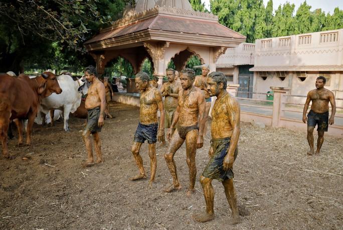 Dân Ấn Độ chữa Covid-19 bằng... phân và nước tiểu bò, bác sĩ nói gì? - Ảnh 5.