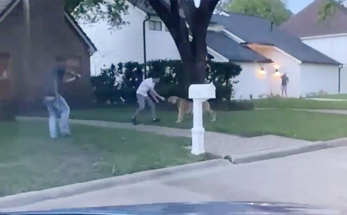 Mỹ: Chở hổ Bengal đi trốn cảnh sát, chủ bị bắt, hổ không biết nơi nào - Ảnh 2.